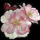 Romantic Roses by portraitbyflora