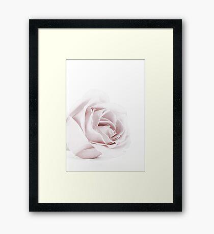 The Pink Rose Framed Print