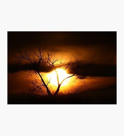 Gloom - Tree Photographic Print