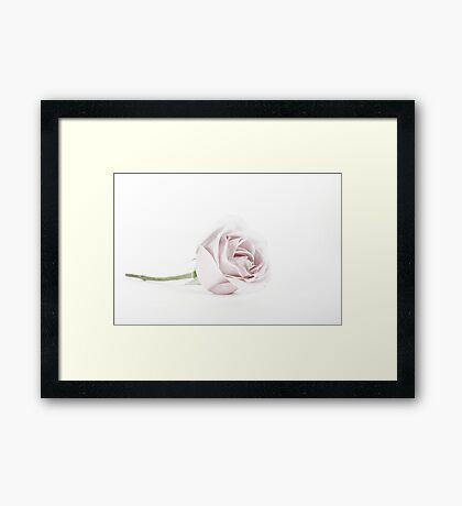 The Pink Rose (2) Framed Print