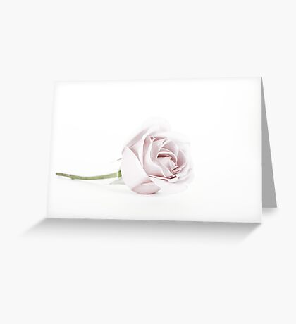The Pink Rose (2) Greeting Card