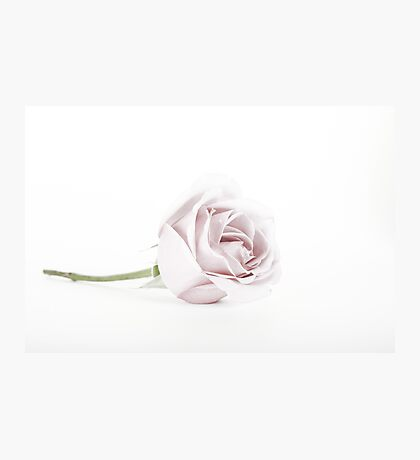 The Pink Rose (2) Photographic Print