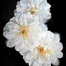 White Roses by portraitbyflora