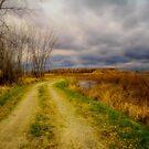 A path less travelled  by Gabi Swanson