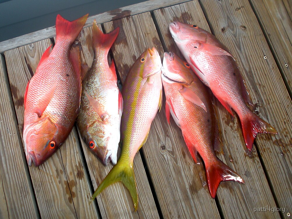 Yellow & Red Snapper  by patti4glory
