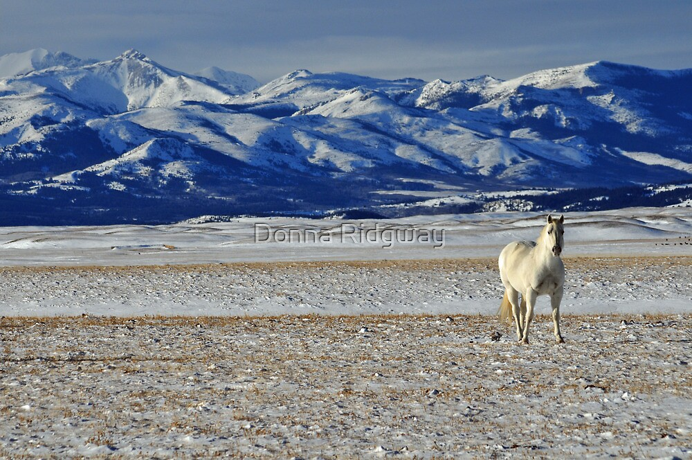 White Horse by Donna Ridgway