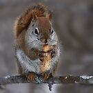 Squirrel with nut by Jim Cumming