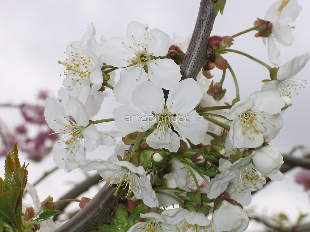 White Blossoms by art2plunder