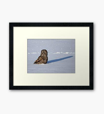 Great Grey Owl casts a long shadow Framed Print
