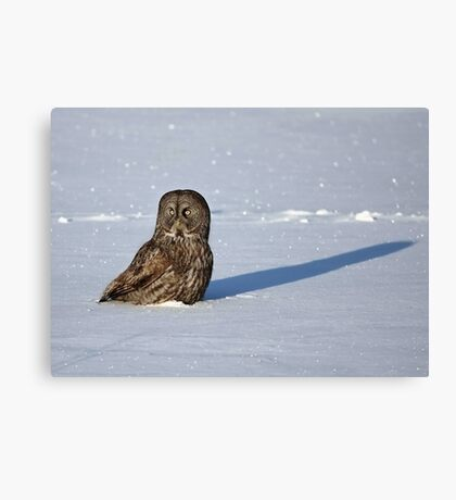 Great Grey Owl casts a long shadow Canvas Print