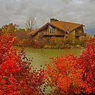 last colors of fall by Gabi Swanson
