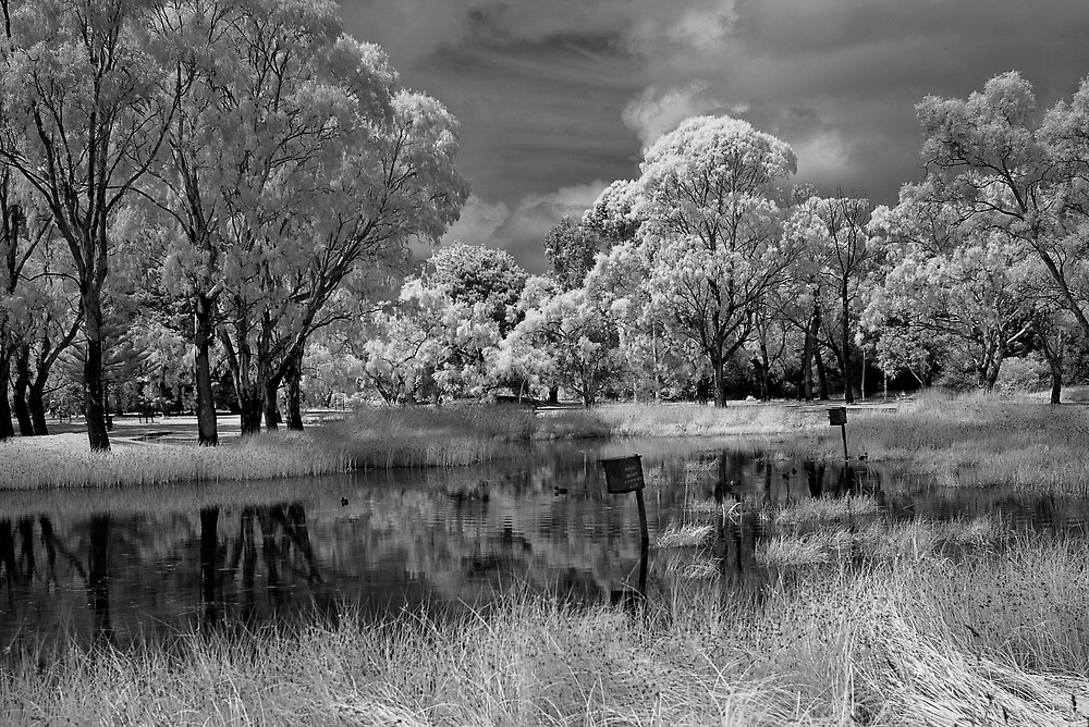 IR Pond 2 by Akif  Kaynak