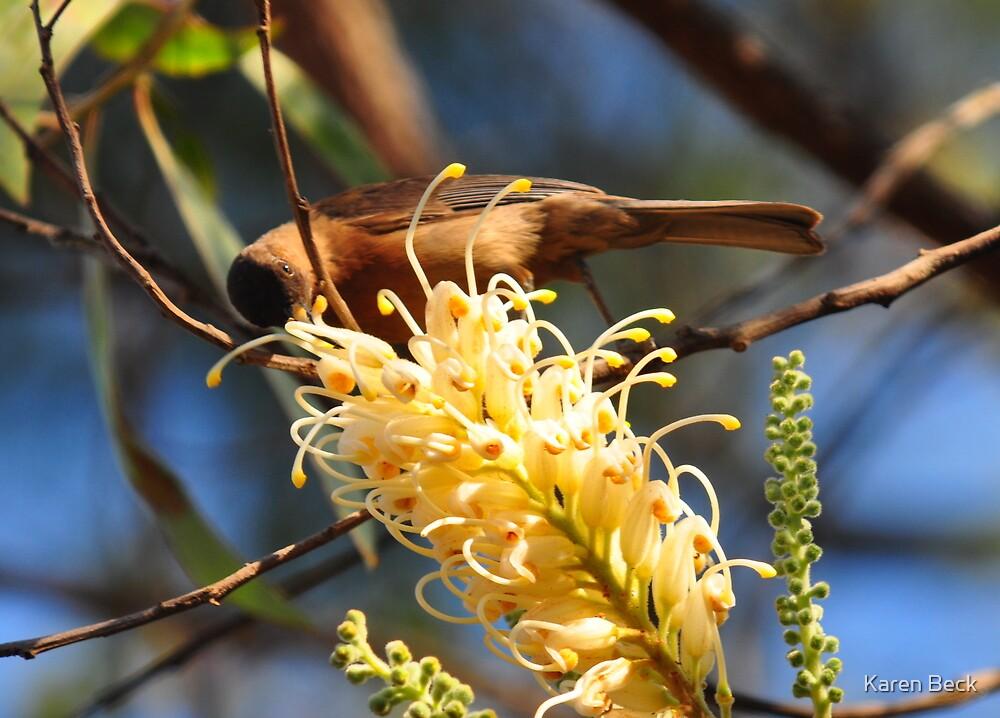 Dusky Honeyeater Townsville by Karen Beck