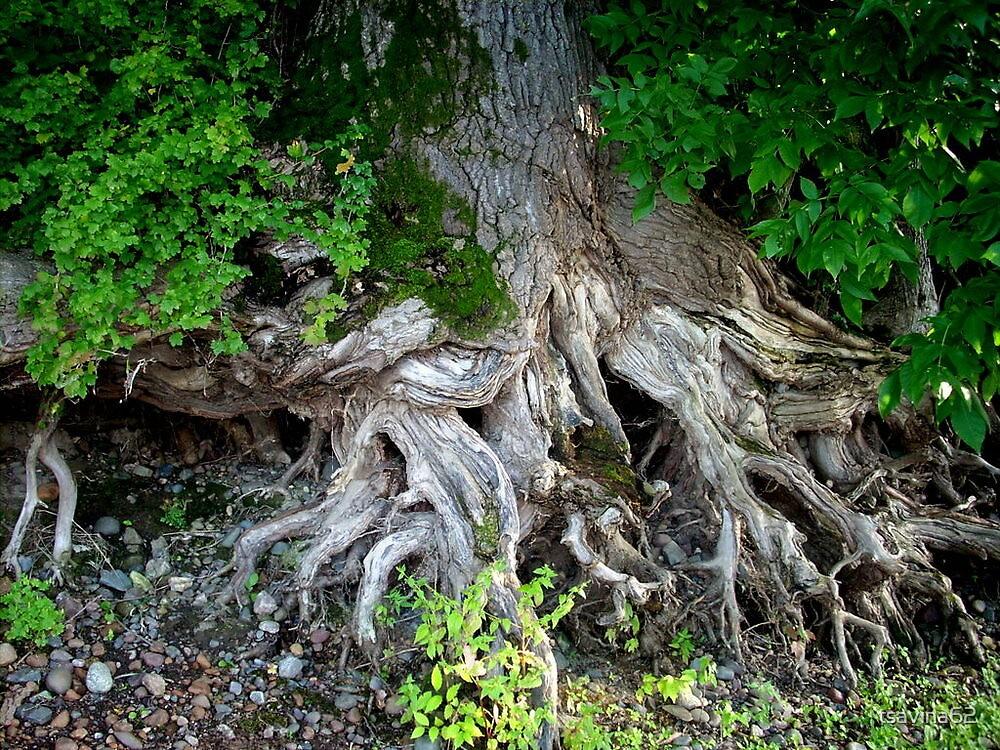 The Roots of Life by tsavina62