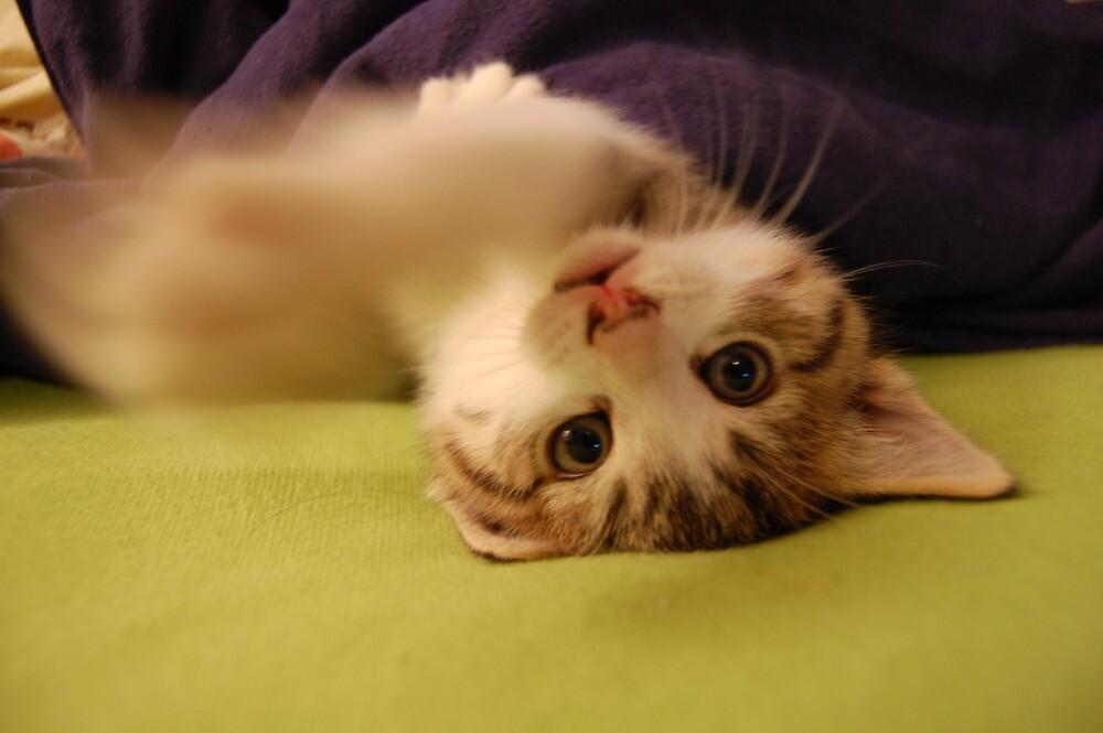 Playful Kitten by LeanneDixon