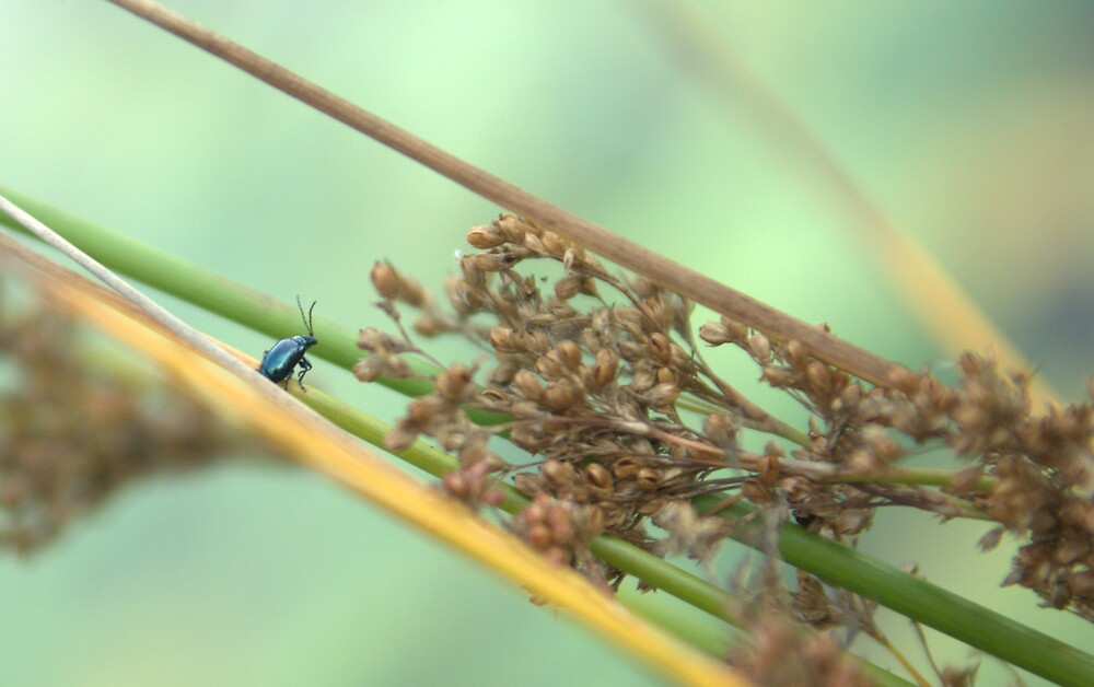 A bugs life by ColeenV