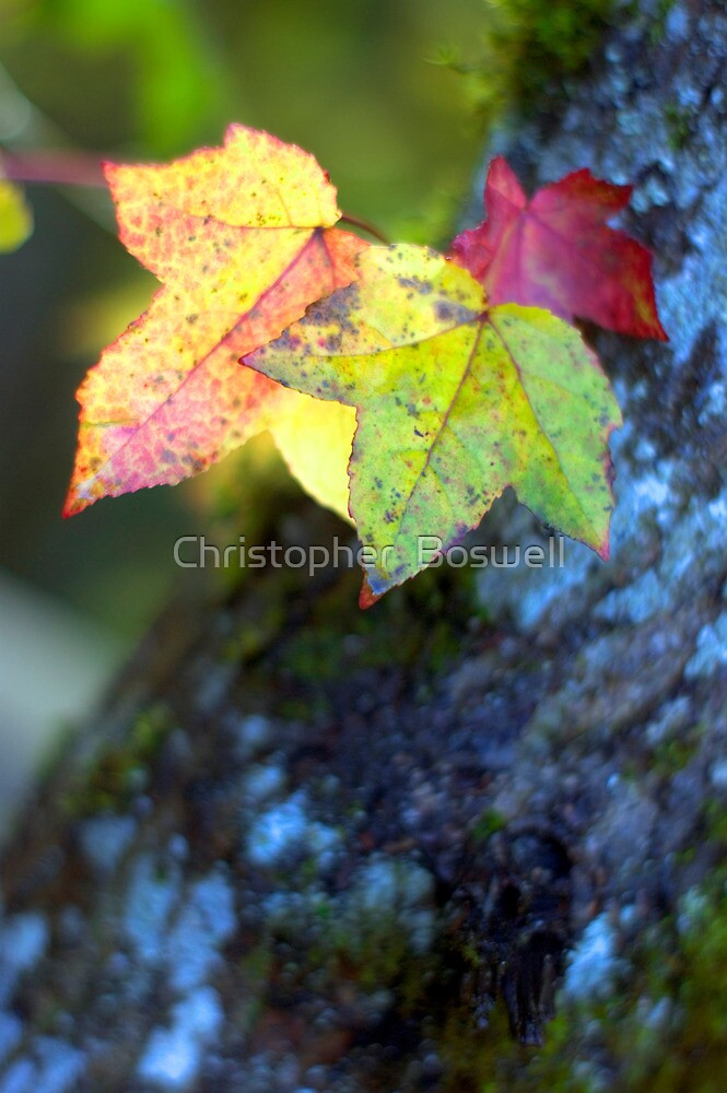 Leaves and Moss by Christopher  Boswell
