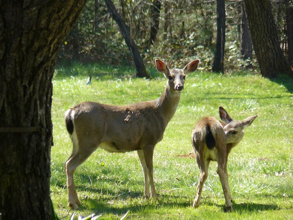 Oh Deer! by DaleEdmondson