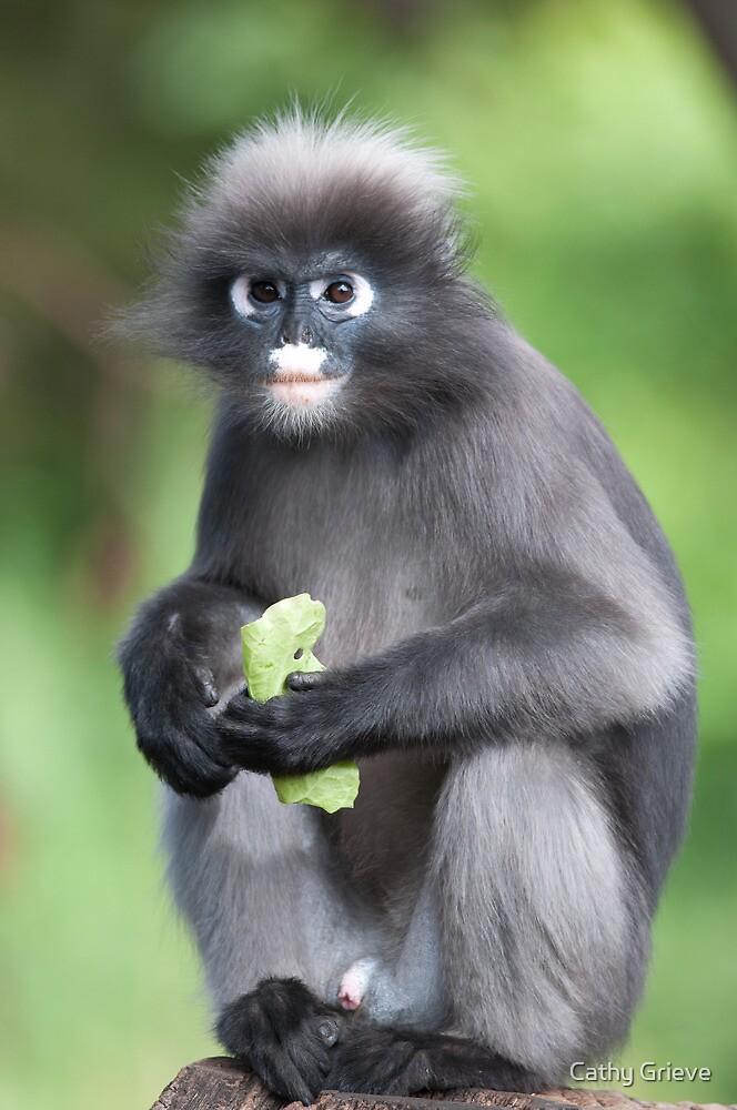 Dusky Leaf Monkey by Cathy Grieve