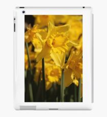 Daffodills at Ham House iPad Case/Skin