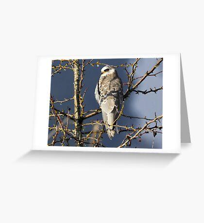 Winter Majesty Greeting Card