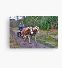 A forest ride Canvas Print