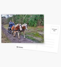 A forest ride Postcards