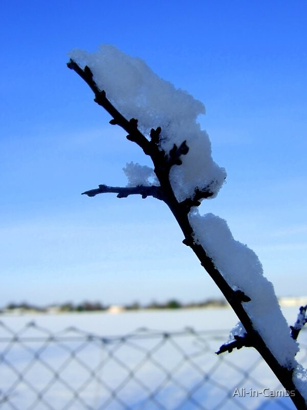 Snowy twig by Ali-in-Cambs