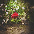 196 - Dieser Garten von CarlaSophia