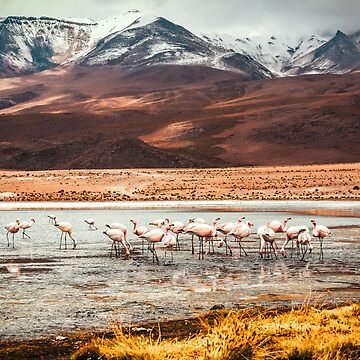 Flamingos Bolivia by SayAhh