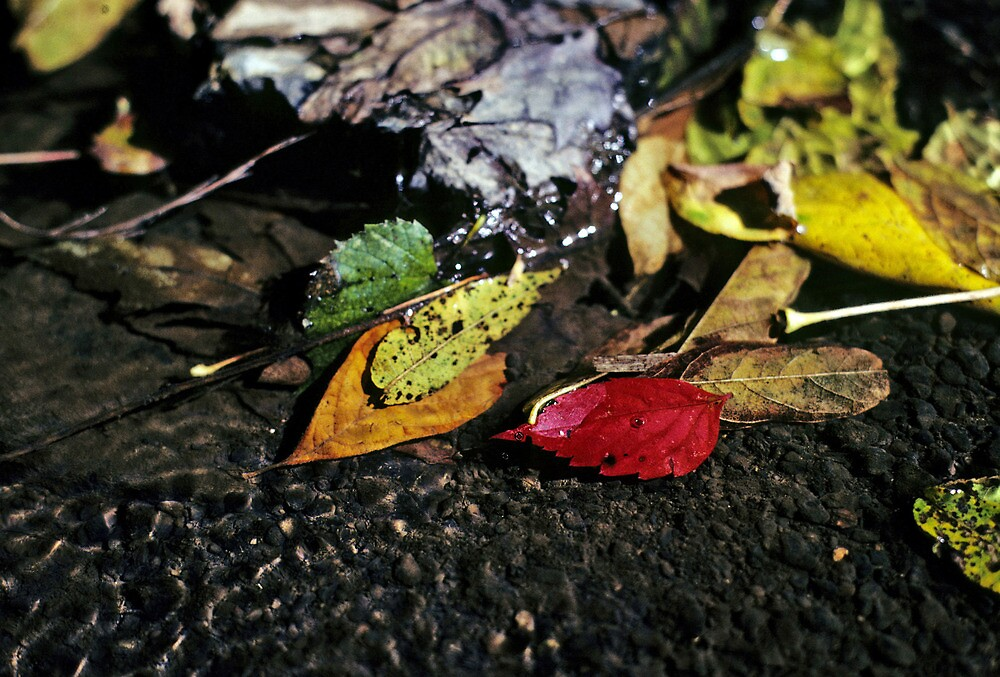 Leaves in a Stream by Dave Chafin Photography