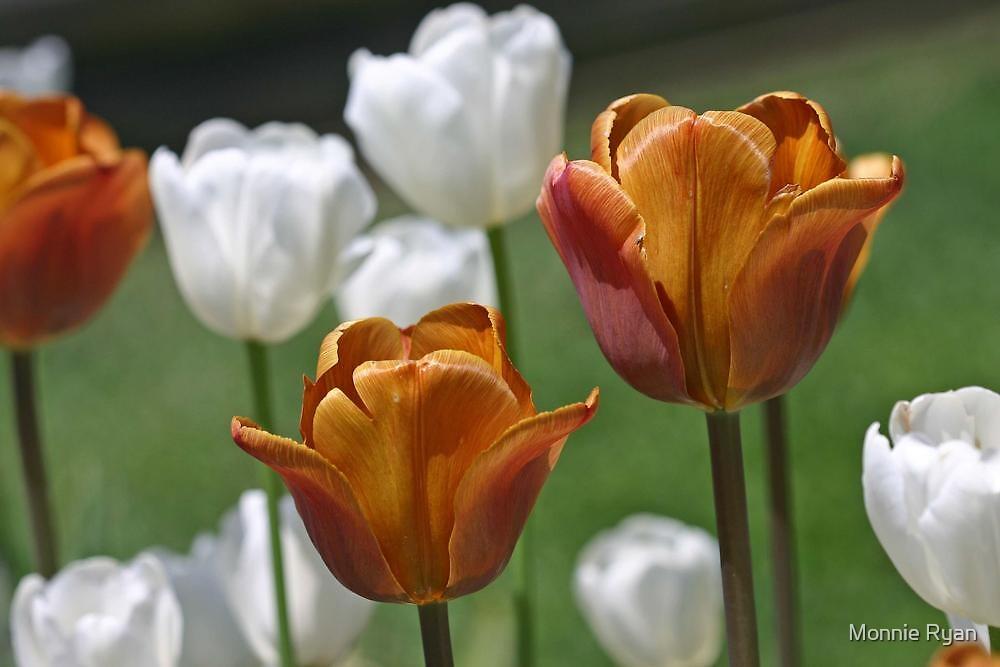 Golden Tulips by Monnie Ryan