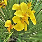 Yellow Orchid by Lesliebc