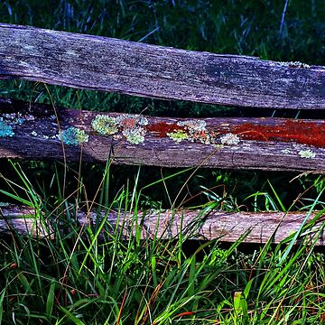 Old fence  in the rays of the setting sun  by Masha-Gr