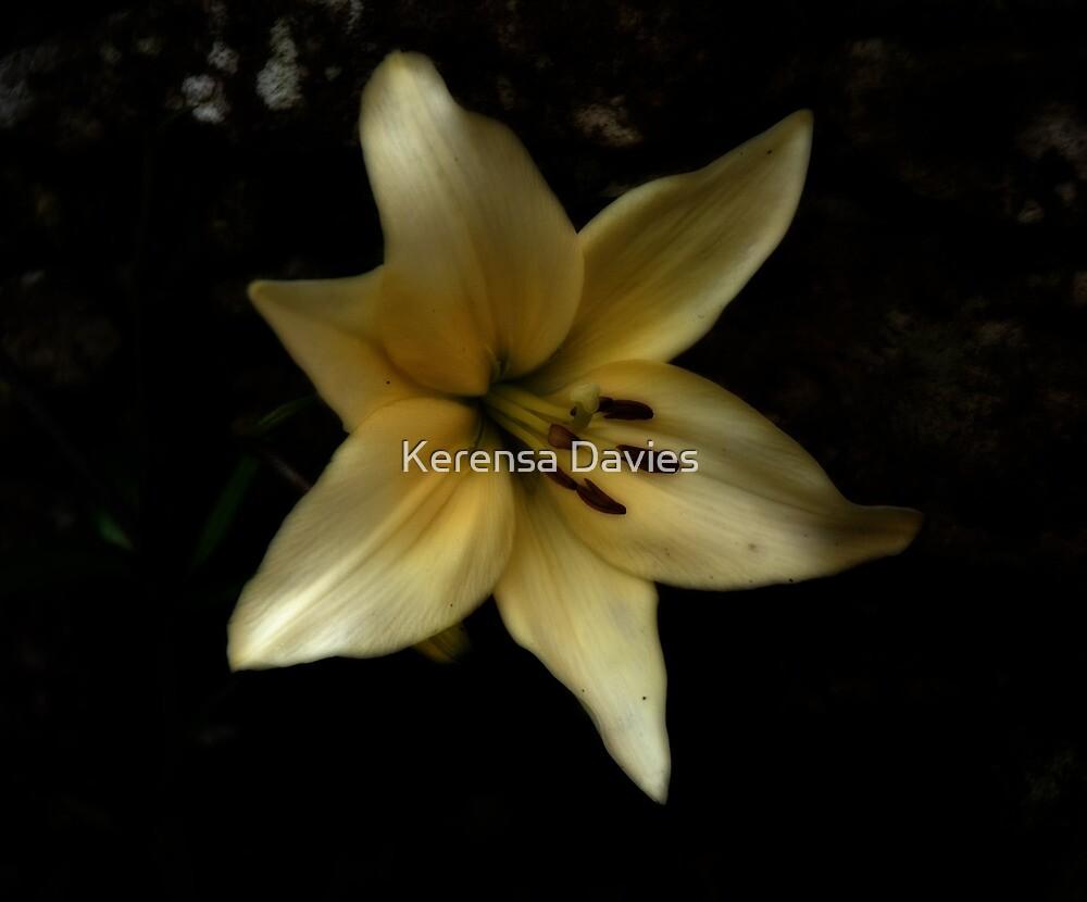 Lily by Kerensa Davies