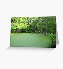 louisana swamp Greeting Card