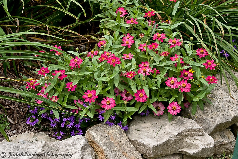 Flower bed by Judy Lawhon