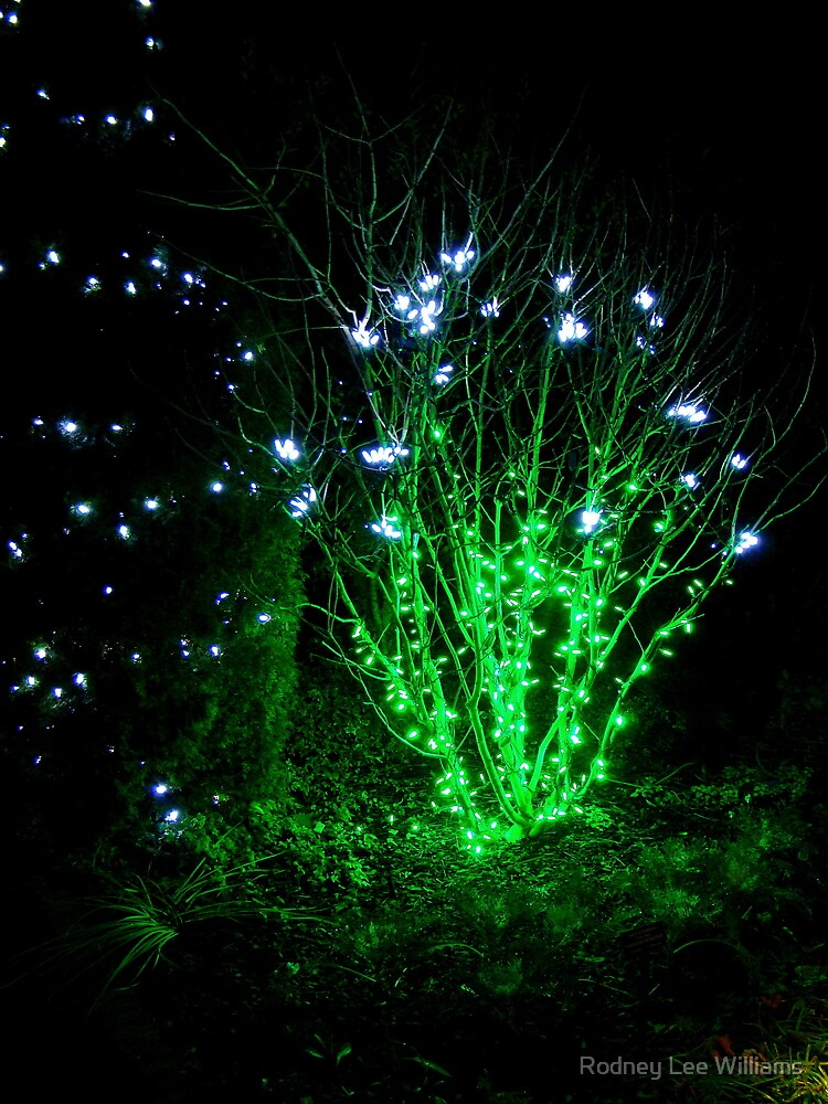 Fairy Light by Rodney Lee Williams