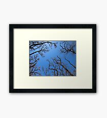 Dead trees in the environmental catastrophe Framed Print