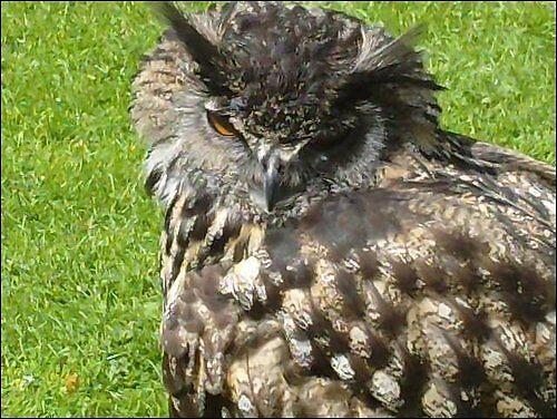 Owl  by Natasha Calvert