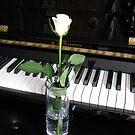 Die musikalische Rose von BlueMoonRose