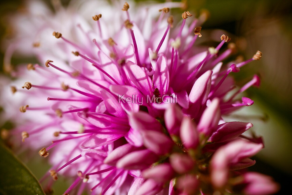 Ant in Pink by Kelly McGill