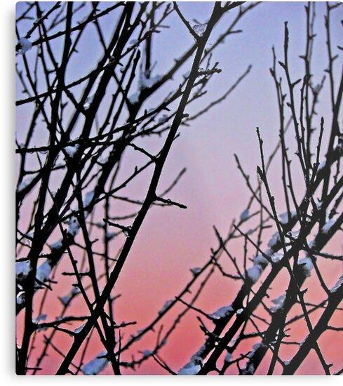 December Sky by Curtis  Sheppard