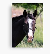 Hello There :) Canvas Print