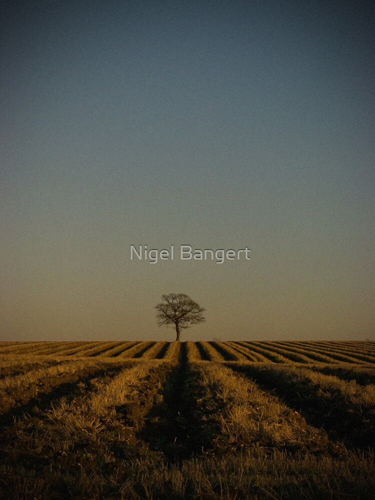 Alone by Nigel Bangert
