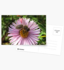 The Bee-autiful Flower. Postcards