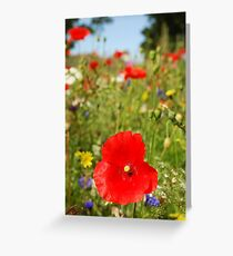 Wild Fields Greeting Card