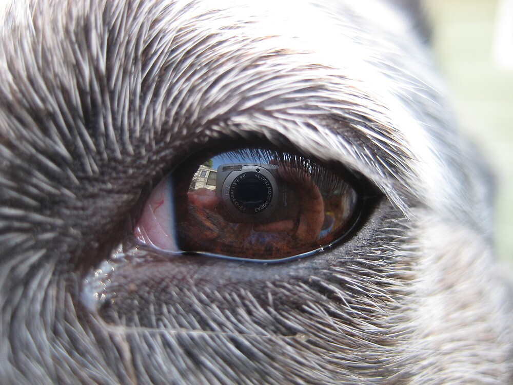 The world from the eyes of a Blue Heeler by Nathaniel Barrett
