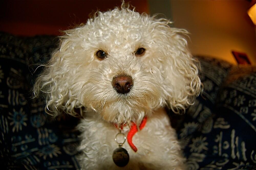 Puppy Portrait by LeanneDixon