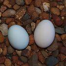 Eggs Found by Kylie Van Ingen